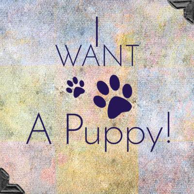 PuppyApp